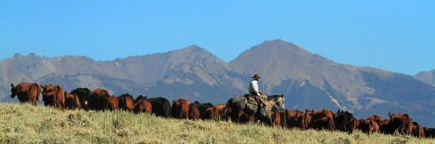 Hamilton Ranch 1068